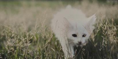 Karlstad Cat Cat Cat